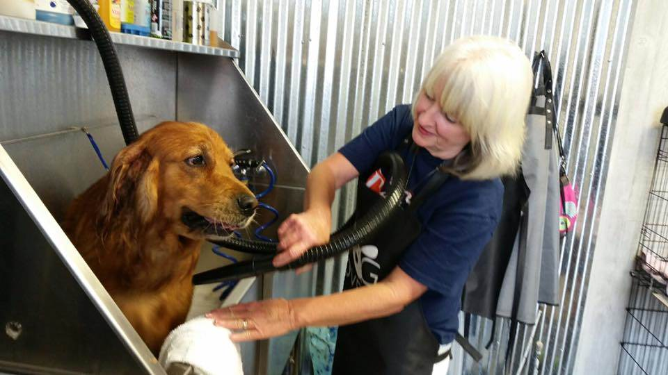 Muddy paws dog wash and grooming image image solutioingenieria Gallery